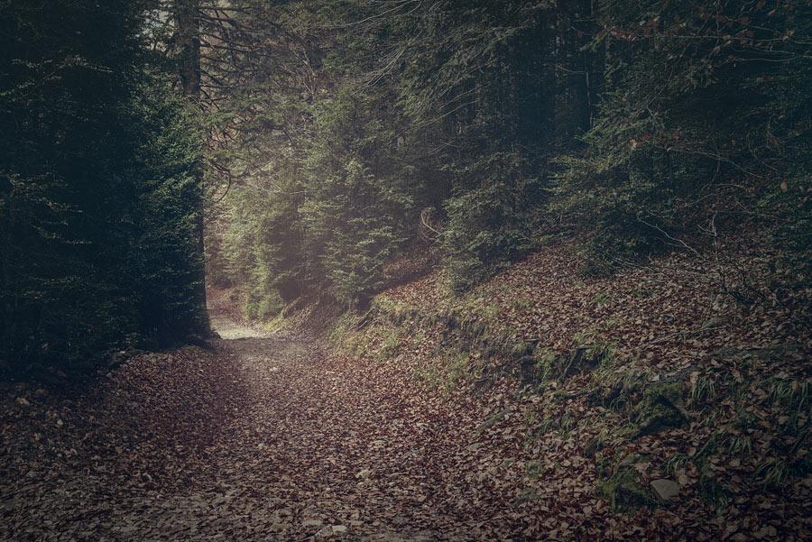 Luz-en-el-camino_DSC4061
